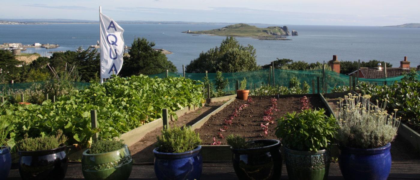Kitchen Garden Plans