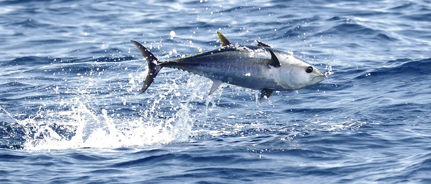 Bluefin Tuna served at Aqua